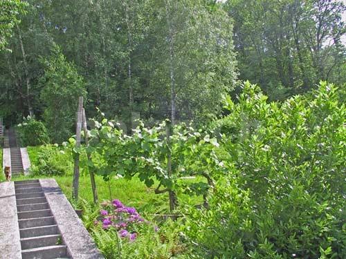 6592H145-151_6592H145_giardino.jpg